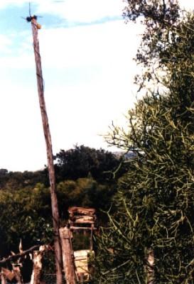 Imithi in ntandakuwela mahlabatini district zululand